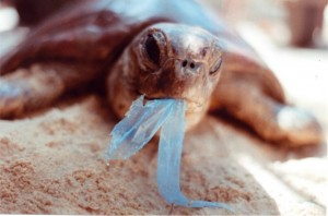 a turtle at the mercy of a plastic carrier bag