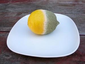 lemon wearing a fashionable blue coat