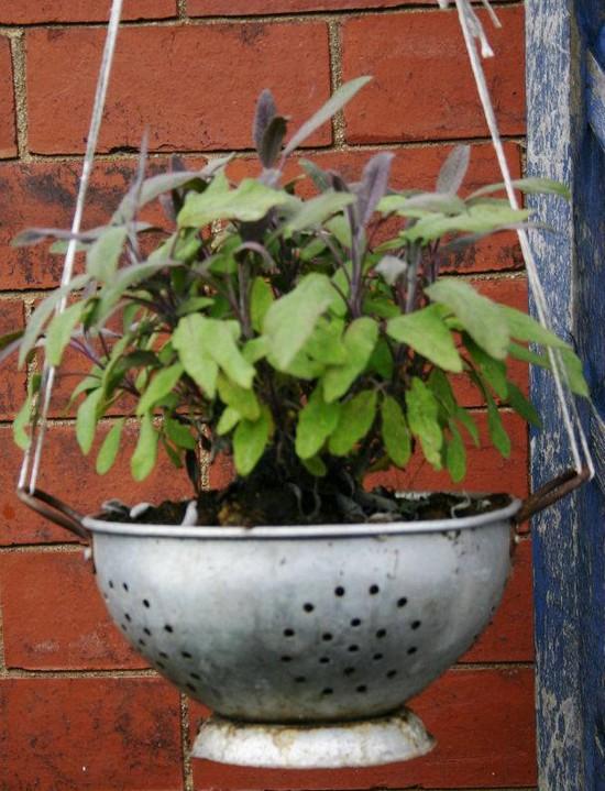 Branny's colander becomes a planter!